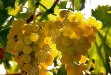 End of Summer - Horia, Tulcea