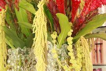 Floral Arrangements / Our weekly floral arrangements, from Stems of Lexington, KY.