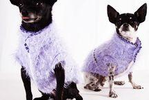 Mad For Pet Italia - Chihuahua Edition / #madforpetforever #madforpet #italia #df #anteprima #collezione #autunno #inverno #gattinara #venezia #fashion #dogs #sumisura #madeinitaly  donatella.madforpet@gmail.com www.madforpetitalia.it