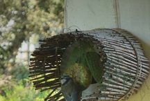 Mangeoires / Mangeoires pour oiseaux du jardin.