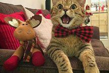 ¡Meow!
