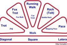 Gaited Horse Info / by Mary Fleshman