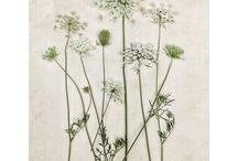 Kwiaty - Na zaproszenia