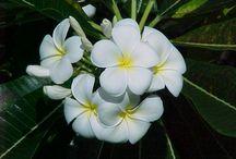 aloha from hawaii... / by joseph's mom