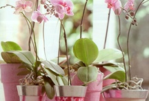 orchid ideas
