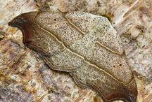 Schmetterlinge & Nachtfalter | LigaVogelschutz