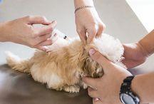 Dog Care/Information