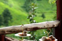 marguerite tea in guava orchard / Vintage tea