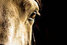 HORSE PHOTOS