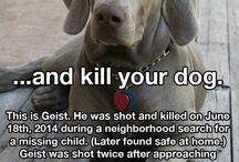 #Justice For Geist / by Gina Lolohea