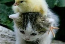 For the love of **CUTE** / A collection of cute images of animals, babies, and other adorable things. ^_^