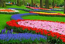 Keukenhof / Keukenhof Gardens with such vibrant colors and flowers of various heights, planted in a unique pattern...makes this garden spot spectacular!