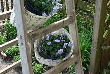 Ladder Luv / by Christine @ Little Brags Blog