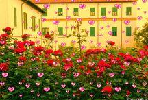 Album Photo / Monastero Passioniste Vignanello:  Venite in disparte; in un luogo di pace...!!!!