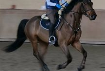 My future horse