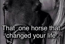Niki equitación