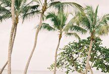 Palmeras [] Palms