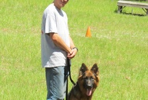 Puppy Training Program