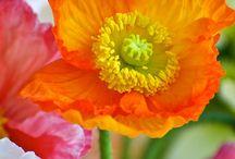Inspiración flores
