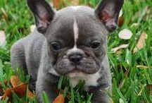 så söt hund
