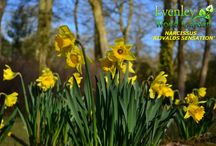 Magnificent Spring / Spring is simply stunning at Evenley Wood Garden...