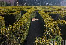 Il Labirinto di Borges / Il labirinto di Borges è una installazione perenne presso la Fondazione Cini, nell'isola di San Giorgio a Venezia.