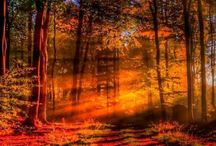 Foto - Autumn
