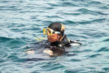 Roatán potápění / Ostrov Roatan a možnosti potápění na jednom z nejvyhledávanějších potápěčských míst na světe.