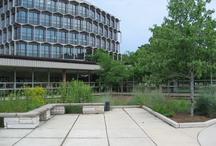 Northeastern Illinois University  / School