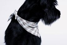 STYLISH DOG PRODUCTS / Check out the wide Cloud7 collection of high quality and sophisticated dog products, serving the full range of accessories your dog will surely appreciate.