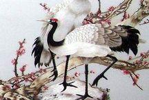 żurawie białe