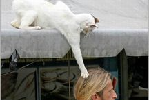 Yaramaz kediler