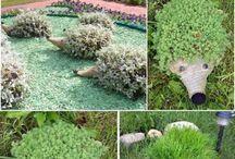 piante arredo