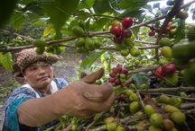coffee farmers