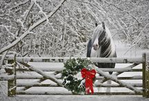 Horses / by Angie Mattox-Benson
