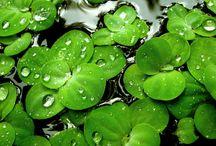 Green / by Josip Strija