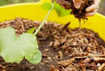 Miracle-Gro inspired / Gardening Tips, tricks, and ideas!  / by Terry Riley