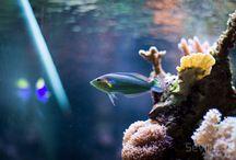 Sevilha Reef II / Saltwater tank