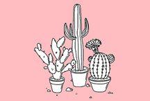 фестиваль/cactus