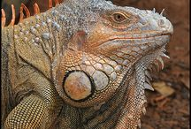 Reptiles, snakes, turtles and lizards