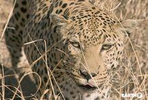 Botswana / L'Africa culla dell'umanità, l'Africa crudele, con i suoi orizzonti infiniti, i suoi odori e profumi inconfondibili, le sue contraddizioni. Un mondo fatto di affascinanti etnie, di natura selvaggia, ma soprattutto di incontri emozionanti, che sanno tramutare il viaggio in un'occasione imperdibile di arricchimento personale