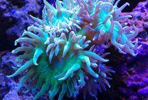 Underwaterword
