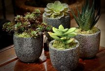 Succulents: Southwest Interior Accents / Botanicals in the home can bring life and vitality. Succulents are easy-to-care-for plants that add an organic contemporary design element to your home.   http://ceterrainteriordesign.com/2014/02/succulents-great-interior-accents-southwest/