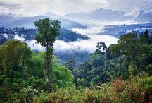 Lesy a Pralesy