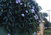 Jardinagem - Área externa
