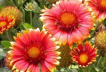 Heat-tolerant plants / by Jeanne Scottie mom