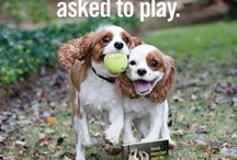 Dogs Know Best / Really Important Stuff My Dog Has Taught Me http://bit.ly/1mpILX8
