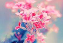 Flowers, Trees & Plants / ― gardens, landscapes, nature