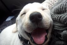 DOG / 犬可愛い