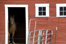 My Big Bank Barn